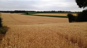 Paysages agricoles 1